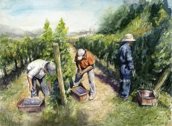 Wine Art Wall Art - Painting - Vineyard Watercolor by Olga Shvartsur