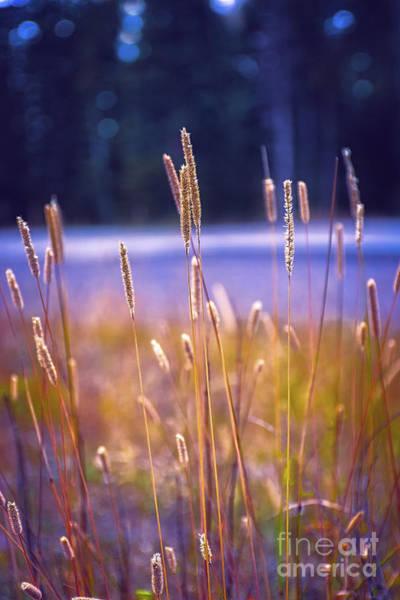 Photograph - Violet Dawn In Durango by Susan Warren