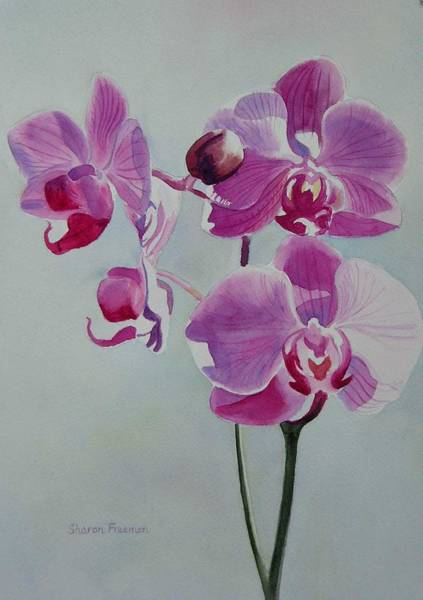 Orchid Painting - Violet Orchid by Sharon Freeman