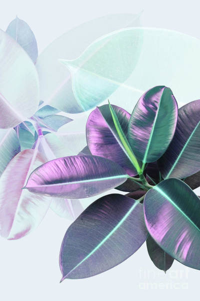Country Living Digital Art - Violet Rubber Plant by PrintsProject