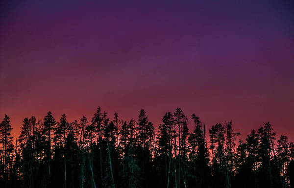 Photograph - Violet Sunset In Yellowstone National Park by Chaznik Raab