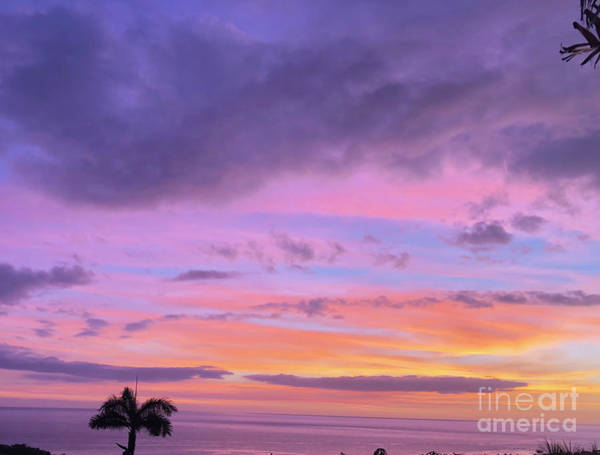 Photograph - Violet Sunset by Karen Nicholson