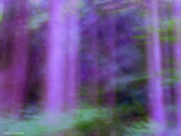 Wall Art - Photograph - Violet Temple by Jane Tripp