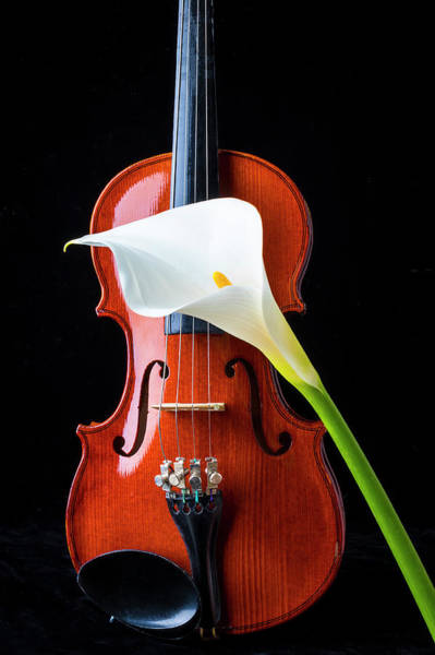 Frets Photograph - Violin And Calla Lily by Garry Gay