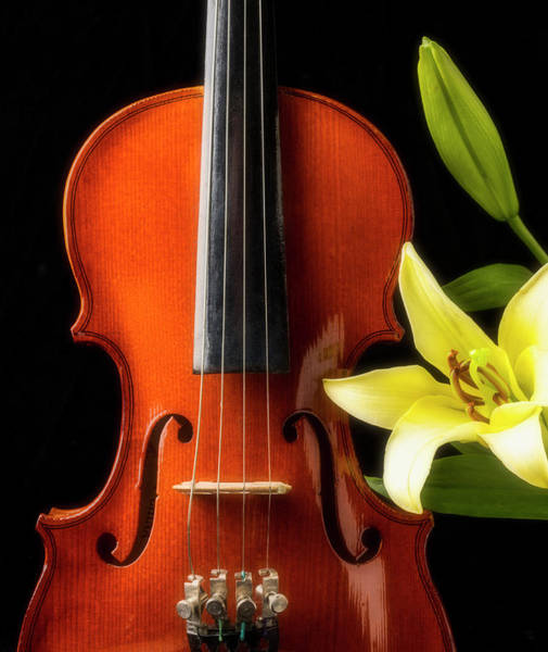Foilage Photograph - Violin And Lily by Garry Gay