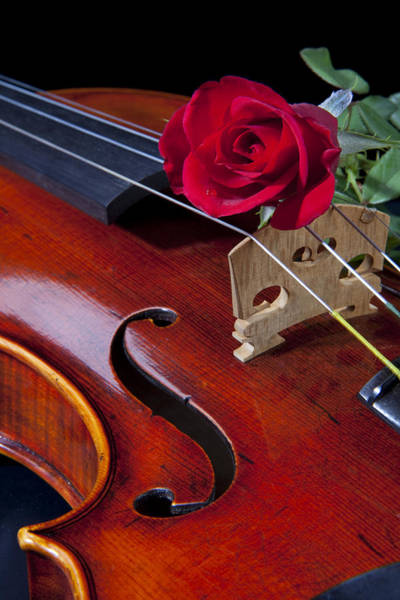 Violin And Red Rose Art Print