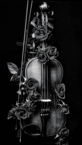 Wet Rose Wall Art - Photograph - violin covered in roses In Black And White by Garry Gay