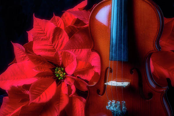 Foilage Photograph - Violin In The Poinsettias by Garry Gay
