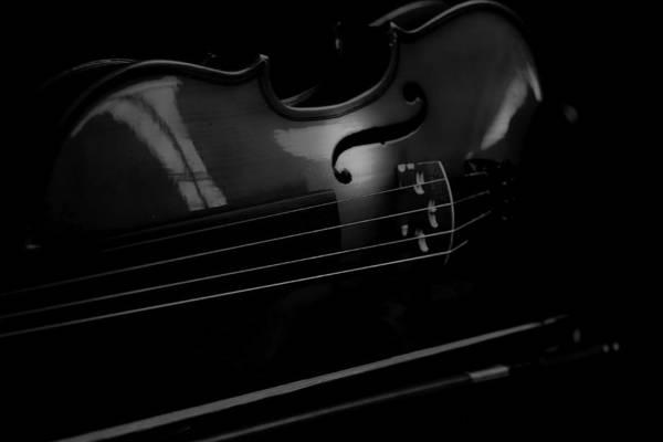 Photograph - Violin Portrait Music 18 Black White by David Haskett II