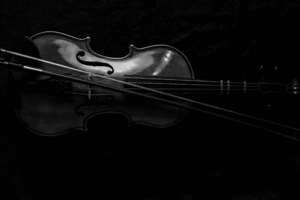 Photograph - Violin Portrait Music 21 Black White by David Haskett II