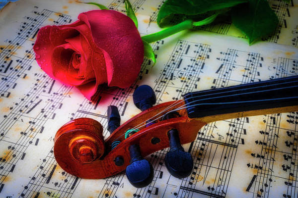 Bluegrass Photograph - Violin Scroll And Rose by Garry Gay
