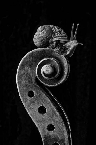 Wall Art - Photograph - Violin Scroll And Snail by Garry Gay