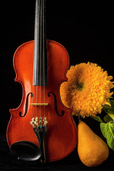 Frets Photograph - Violin Sunflower And Pear by Garry Gay