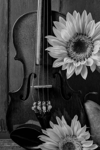 Wall Art - Photograph - Violin Sunflower Still Life by Garry Gay