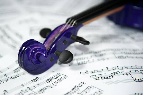 Violin Tuning Pegs  Art Print