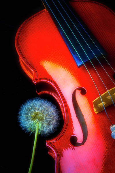 Floret Wall Art - Photograph - Violin With Dandelion by Garry Gay