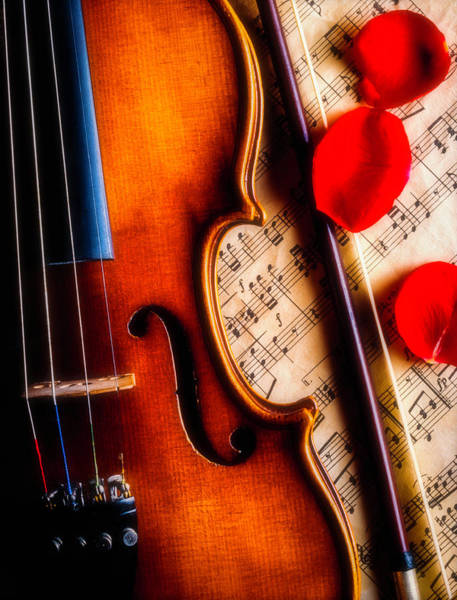 Frets Photograph - Violin With Rose Petals by Garry Gay