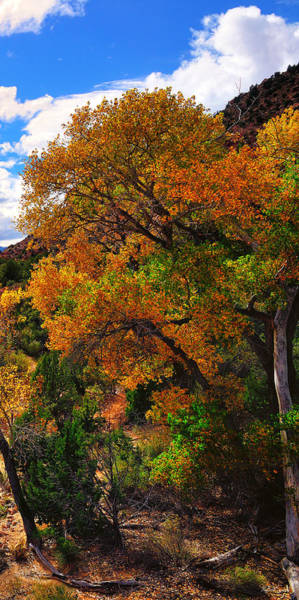Photograph - Virgin River Triptych Right Panel by Greg Norrell