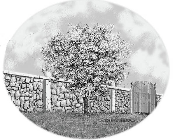 Wall Art - Drawing - Virginia-dogwood by Jim Hubbard
