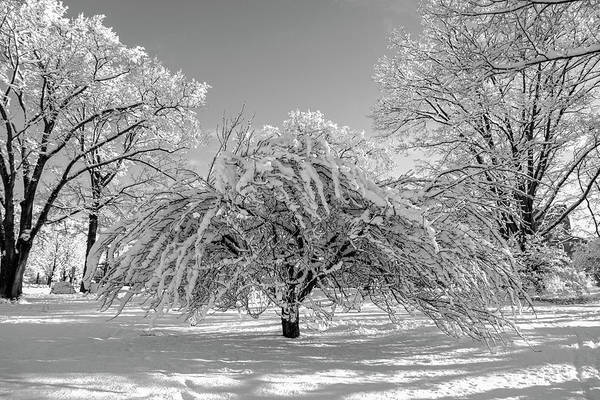 Wall Art - Photograph - Virginia Tech Campus The Snowy Tree Bw by Betsy Knapp