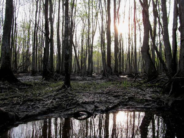 Photograph - Virginia Waterways 2 by Digital Art Cafe