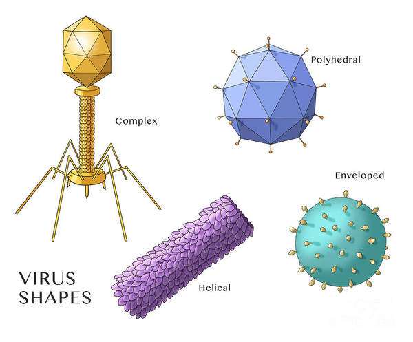Wall Art - Photograph - Virus Shapes, Illustration by Monica Schroeder