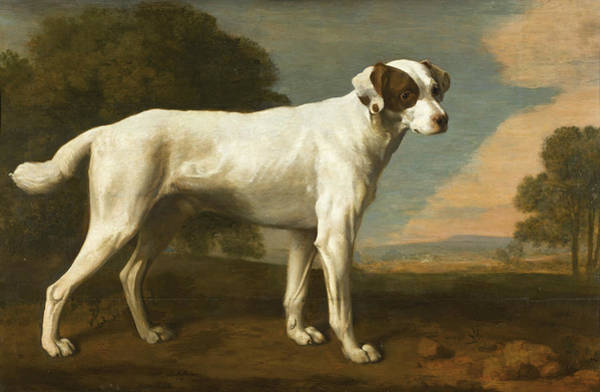 Wall Art - Painting - Viscount Gormanston's White Dog by George Stubbs