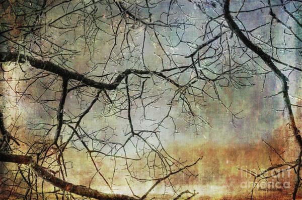 Photograph - Vision And Strength by Randi Grace Nilsberg