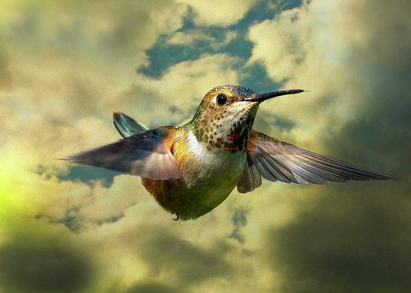 Photograph - Vision by Sheldon Bilsker