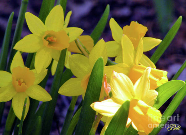 Wall Art - Photograph - Visions Of Daffodils Danced In Their Heads by Christine Belt