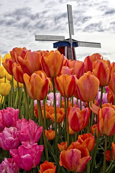 Photograph - Visions Of Holland by Wes and Dotty Weber