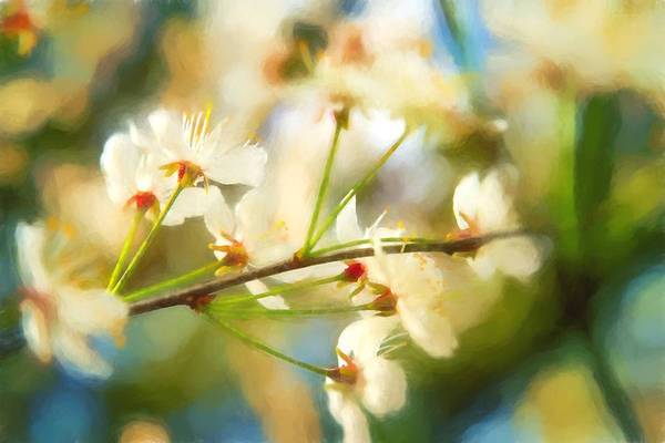 Photograph - Visions Of Spring - Floral by Barry Jones