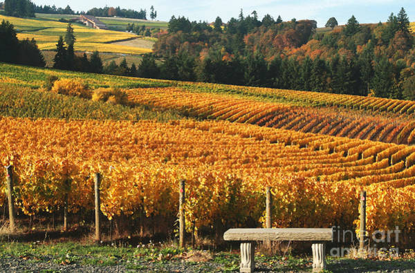 Willamette Photograph - Visiting Wine Country by Margaret Hood