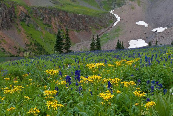 Photograph - Vivid Colors Of The Colorado Alpine by Cascade Colors