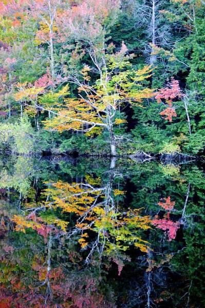 Photograph - Vivid Fall Reflection by Chris Alberding