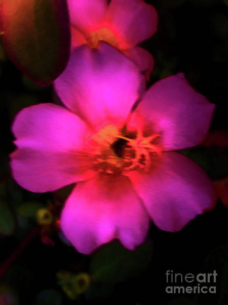 Photograph - Vivid Rich Pink Flower by James Fannin