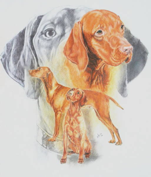 Drawing - Hungarian Vizsla Revamp by Barbara Keith