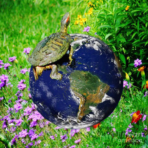 Digital Art - Voice Of The Turtle by Lizi Beard-Ward