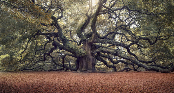 Oak Photograph - Voices Of The Angels by Magda  Bognar