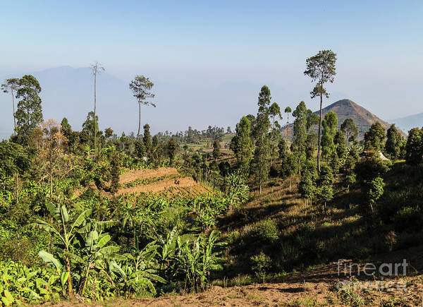 Photograph - Volcanic Landscape In Garut, Java, Indonesia by Didier Marti