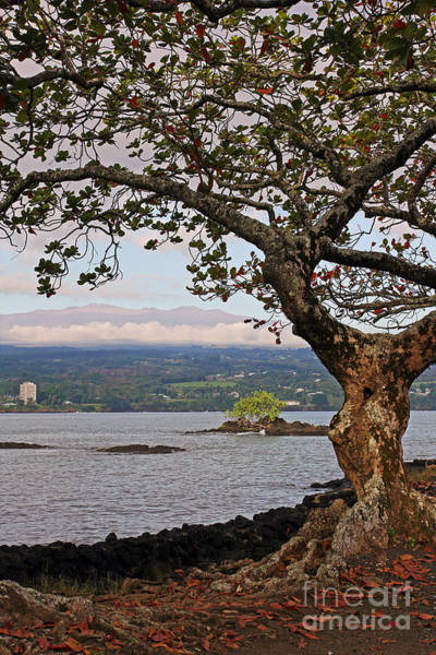 Photograph - Volcano Through The Tree by Jennifer Robin