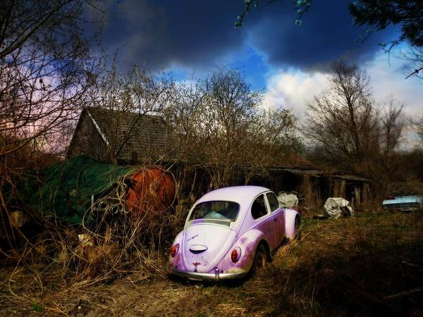 Photograph - Volkswagen Graveyard by Digital Art Cafe