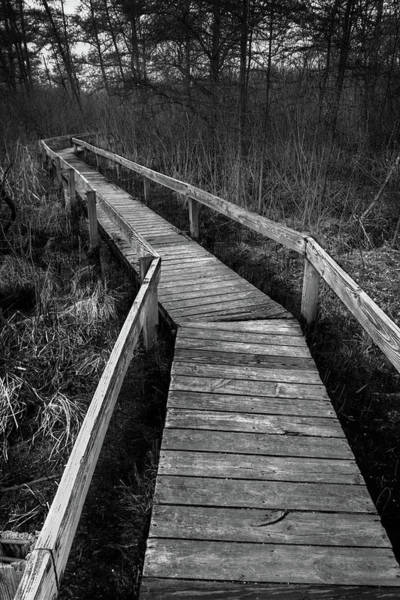 Wall Art - Photograph - Volo Bog Boardwalk by Steve Gadomski