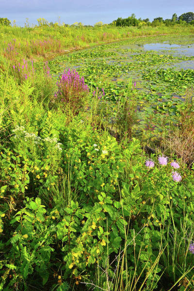 Photograph - Volo Wetland Wildflowers by Ray Mathis