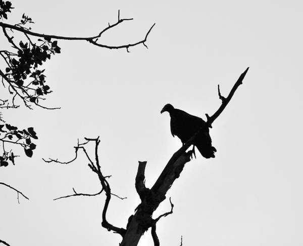 Wall Art - Photograph - Vulture Silhouette by John Ricker