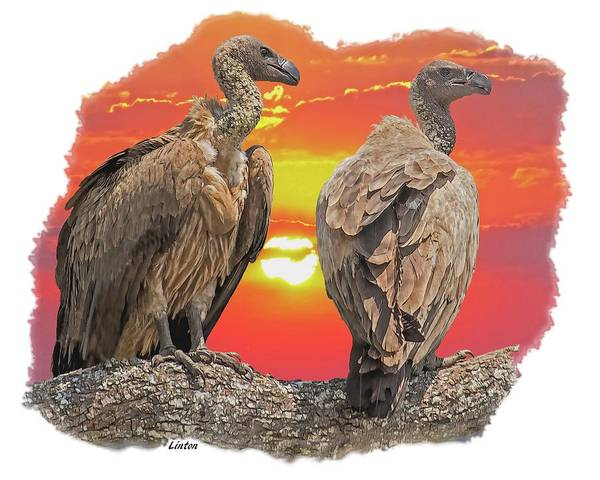 Photograph - Vultures At Sunset by Larry Linton