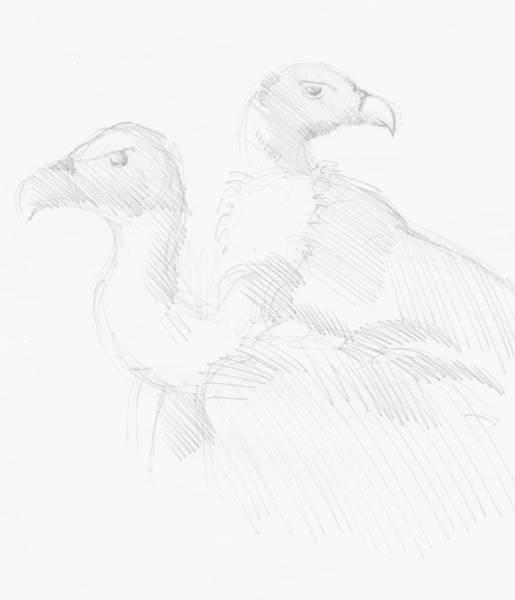 Drawing - Vultures Drawing by Mike Jory