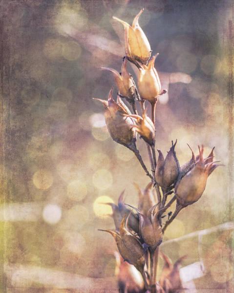 Photograph - Wabi Sabi by Jennifer Grossnickle