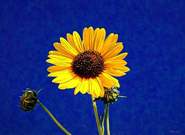 Photograph - Wabi-sabi Sunflower by Anna Louise