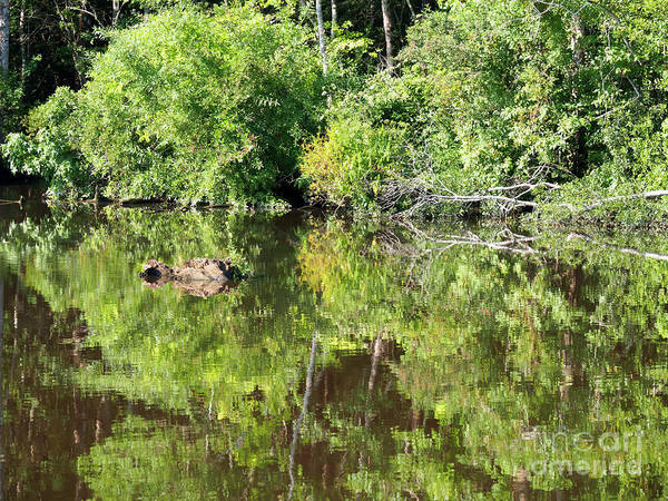 Wall Art - Photograph - Waccamaw River In South Carolina by Louise Heusinkveld